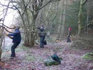 Coppicing Hasel 1