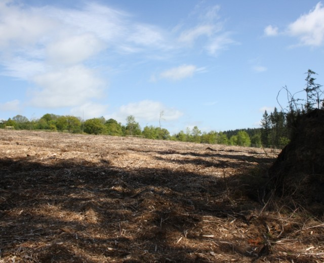 Another view of Croft Wood after it had been cleared of the conifer plantation.