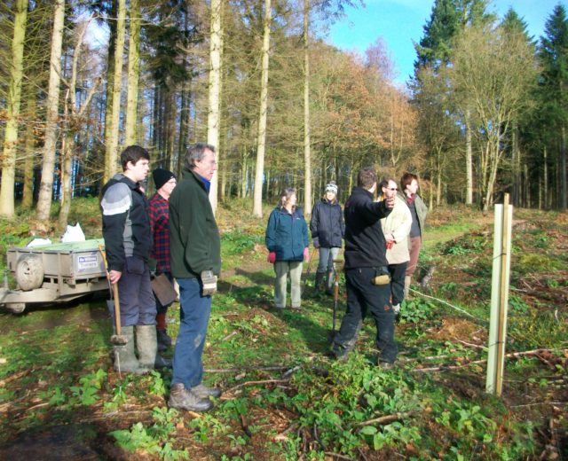 We began the planting in School wood back in 2013